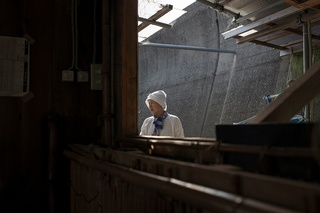 AMA DIVERS -japanese pearl hunters